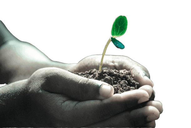 main terre ecoreponsable feuille lpa