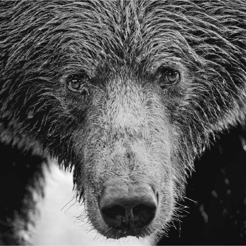 adrien favre ours nb